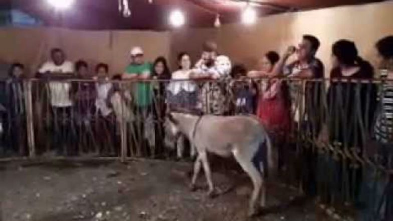 Pannalal, a Donkey in Karnataka Is Predicting Future and It Will Leave You Stunned (Watch Video)