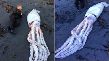 Divers Encounter Giant Squid on New Zealand Beach and The Pics Are Creepy!