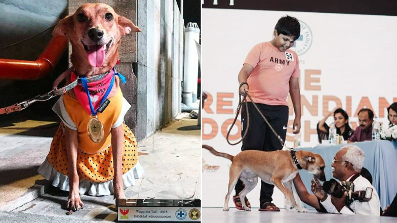 Stray Dogs in Chennai Walked the Ramp For an Adoption Drive, View Cute Pics From The Great Indian Dog Show!