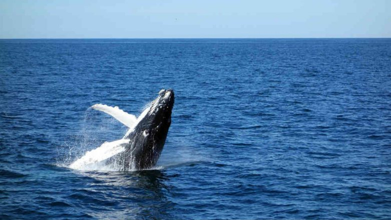 Woman Called 911 to Report About Whales Getting Closer to Their Boat, Gets Trolled Online, Watch Video