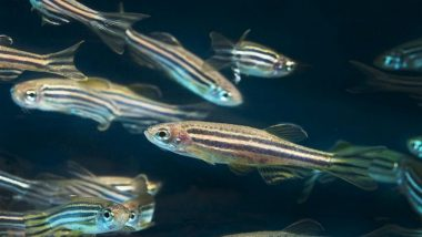 Venom Contributed to Formation of New Fish and Insect Species: Study
