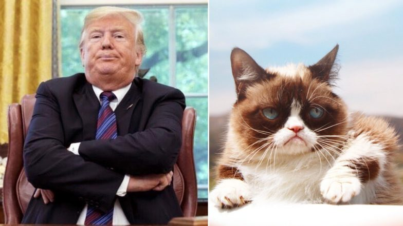 From Grumpy Cat To Donald Trump Google Trends Show Steady Increase