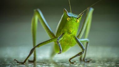 Eat Crickets For A Healthy Stomach? 5 Facts About Eating Insects, Bugs and Other Creepy Crawlies