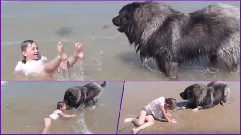 Cuteness Overloaded! Dog Drags Little Girl From the Ocean's Waves Thinking She Is in Trouble of Being Washed Away; Watch Video