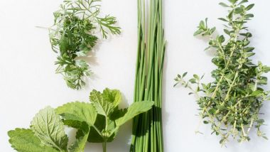 Herbs For Acne: Here's How You Can Treat Pimples The Natural Way