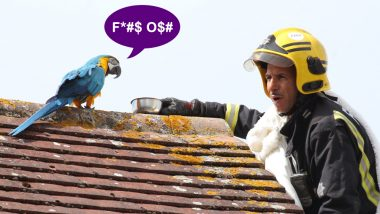 Parrot Swears at London Firefighter Who Was Trying to Rescue Him From The Roof!