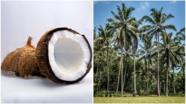 World Coconut Day 2018 Date & Theme: Know How Coconut Is 'Good for Health, Wealth & Wellness'
