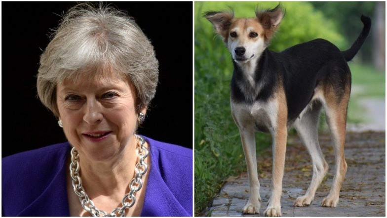 UK Prime Minister Theresa May Under Pressure to Ban Killing of Dogs and Their Consumption
