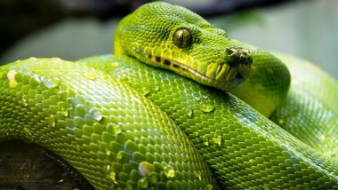 Gujarat Snake Lovers' Club App Educates You About Snakes and Also Connects Rescuers