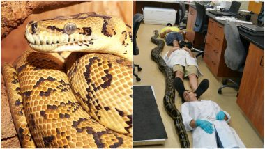 'Super Snakes' in Florida Are a Result of Cross-Breeding With Indian Pythons, Says Study