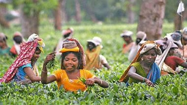 Siliguri Tea Planters Call For Three-Day Strike Demanding Hike In Daily Wages