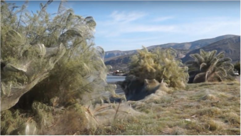 Spider Explosion in Greek Town of Aitoliko Has Coated Everything in a 1,000-Foot Web (Watch Video)