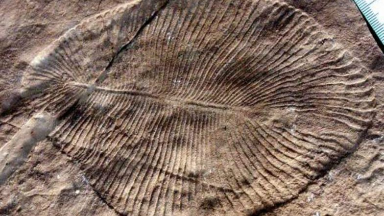 Scientists Identify 558 Million-Year-Old Fossil Identified Dickinsonia as Oldest Known Animal