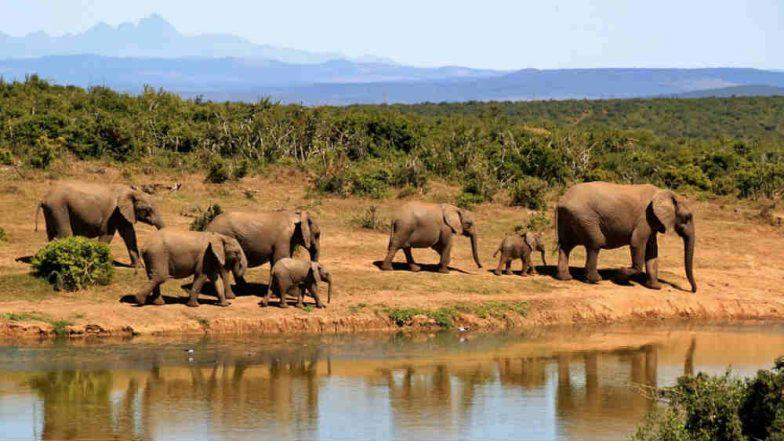 Around 90 Elephants Found Killed Near Botswana Wildlife Sanctuary in Africa