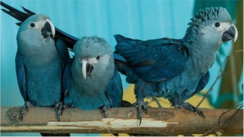The 'Rio' Bird Blue Macaw Parrot, Among 8 Other Species, is Now Officially Extinct, Study Confirms