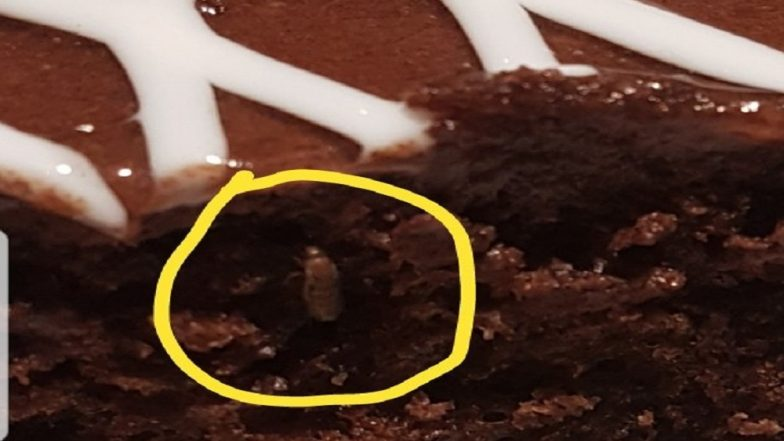 Hyderabad IKEA Store In Trouble Again! Insect Found In Chocolate Cake; GHMC Imposes Fine Of Rs 5,000