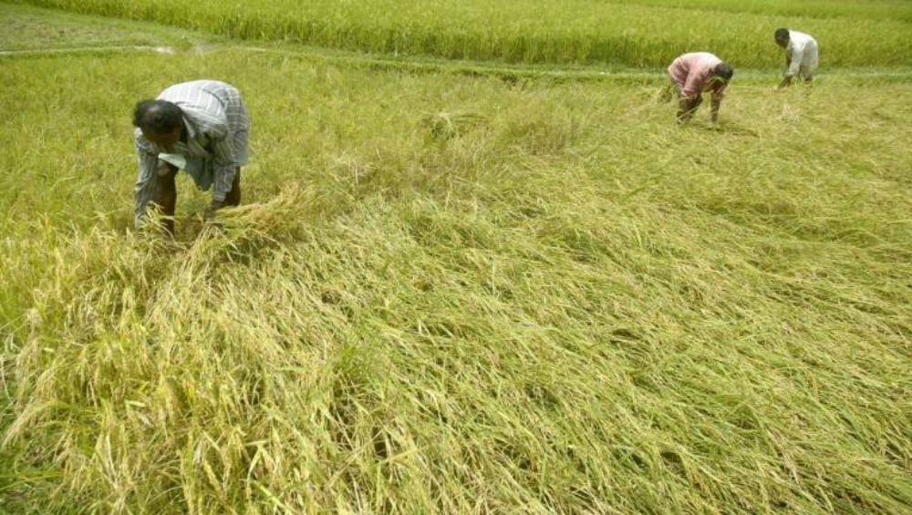 Maharashtra Farmers Hit by Unseasonal Rain in October-November to Get Compensation, Governor Announces Relief Package
