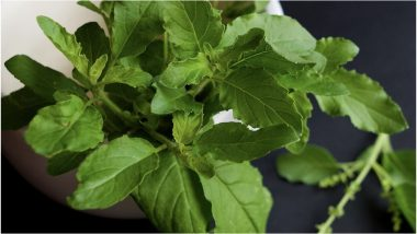 Health Benefits of Tulsi: Ways it Can Boost Your Mental and Physical Health