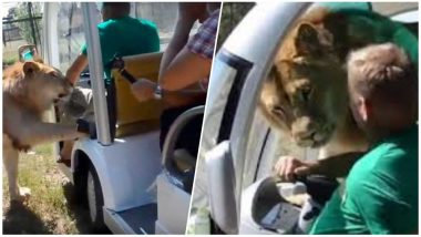 Lion Enters Vehicle And Cuddles With Tourists at Taigan Safari Park in Ukraine, Watch Video!