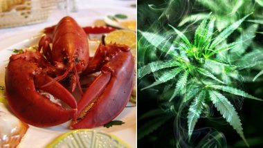 Lobsters Smoke Weed! A Restaurant in Maine is Getting the Crustaceans High to Make Death Less Painful