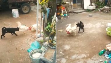 Puppy Struggles to Save a Cock Fight, Watch Funny Video Viral From Coimbatore