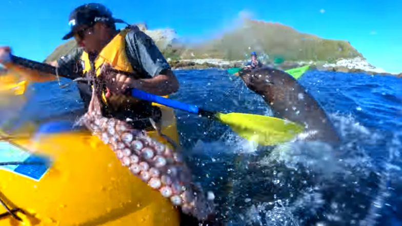 Seal Slaps Kayaker With an Octopus on His Face, Video Goes Viral!