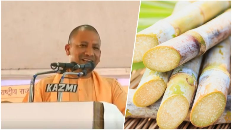 Is UP CM Yogi Adityanath Right About Sugarcane Causing Diabetes? Here's What The Experts Say