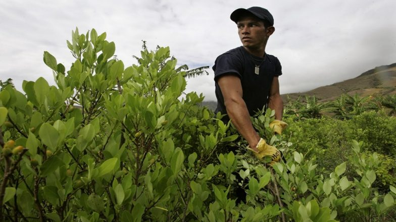 UN Says Colombia's Cocaine Production at 'Record High Levels'