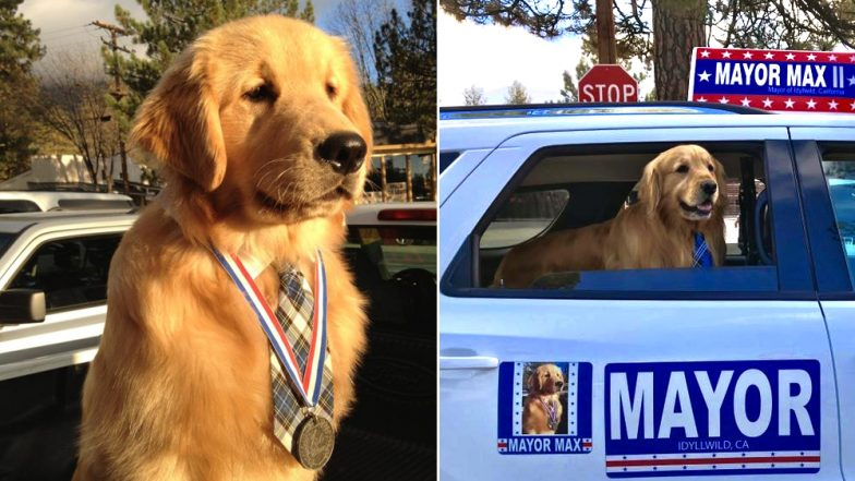 Golden Retriever as Mayor! Californian Town Elected a Dog, View Cute Pics of Max