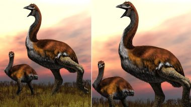 Biggest Bird in the World is Revealed! Flightless Elephant Bird Wins The Title After Decades of Research