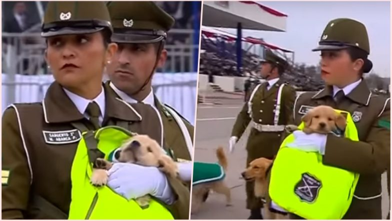 Chile Military Parade With Puppies! Watch Video of Adorable Police Golden Retrievers Who Stole the Show & Hearts