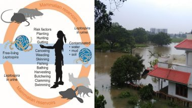 After Kerala Floods, Leptospirosis Outbreak Kills 10 People: Here's How You Can Prevent the Deadly Bacterial Infection