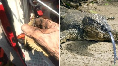 Woman Calls Firefighters to Rescue 'Huge Monitor Lizard,' Turns Out To Be a Small Gecko, View Pic!