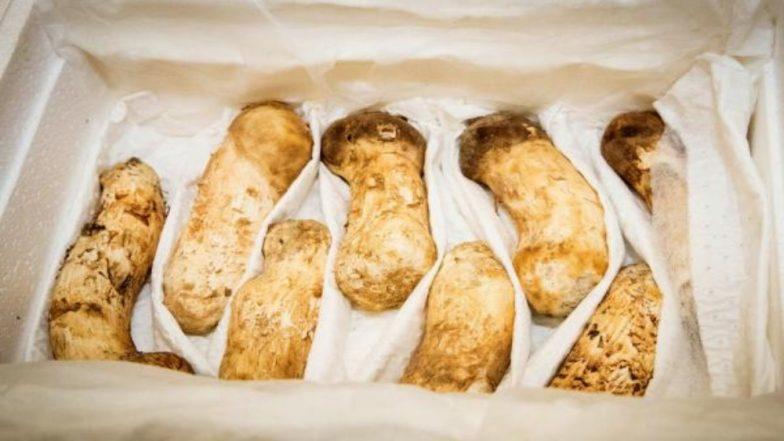 Kim Jong-un Sent Pine Mushrooms Worth 1.83 Million Dollars to South Korea as Gift of Peace