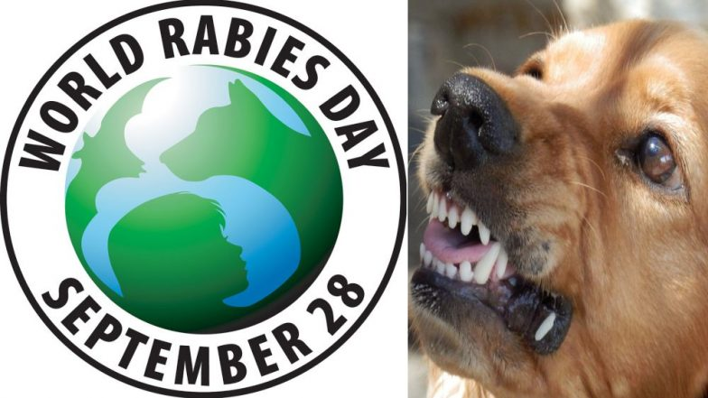 World Rabies Day 2018: The Causes, Symptoms and Treatment of This Viral Disease