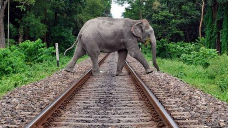 Elephants on Railway Tracks: Seismic Sensors Being Put on Rail Lines to Warn Loco-Pilots; Here's How They Work