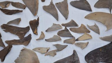 8,000 Kgs of Shark Fins Seized From Mumbai And Gujarat, Meant For Export to China