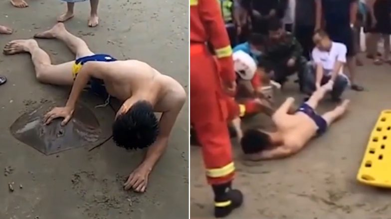 Creating Viral Social Content Was At The Black Heart Of: Stingray Stings Man On Penis In China's Resort, Watch