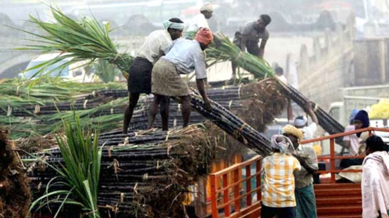 Punjab Government to Pay Rs 25 Per Quintal Extra to Sugarcane Farmers