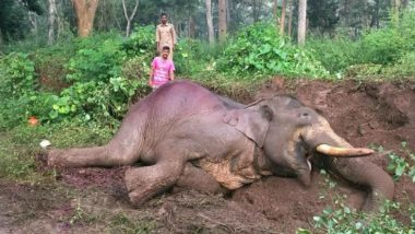Karnataka: 62-Year-Old Elephant 'Indira' Dies in Udupi District