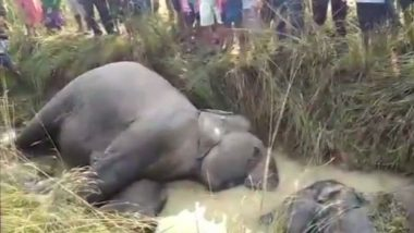Two Elephants Killed After Being Hit by Truck in Odisha's Keonjhar District