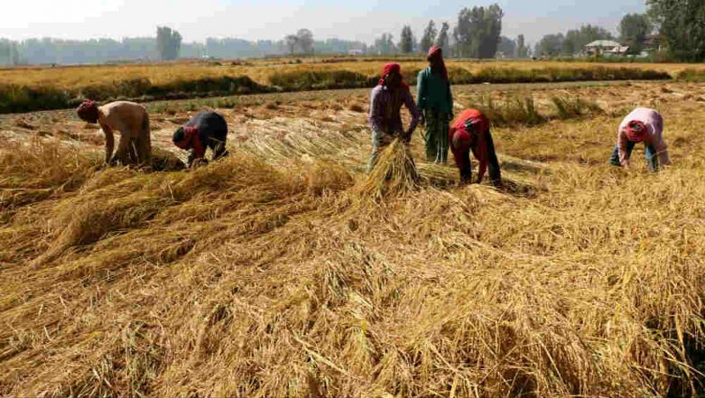 Punjab: Farmers Protest Against Ban on Stubble Burning, Say 'Have No Option But to Set Crop Residue on Fire'