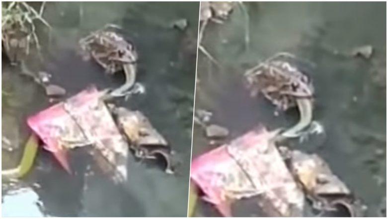 Frog Kills Snake At a Village in Karnataka, Watch Shocking Video