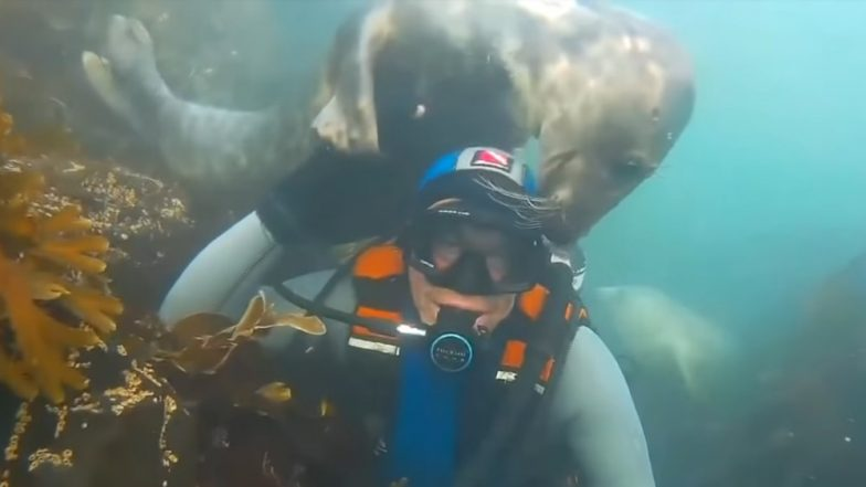 Wild Grey Seal Loves to Hug Humans and Hold Their Hands - Watch The Adorable Video