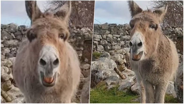 Harriet, The Singing Donkey From Ireland is an Internet Sensation! Watch Viral Video of Her Melodious Opera-like Singing