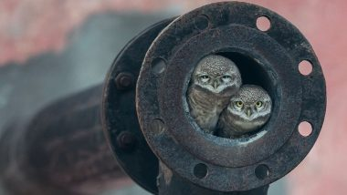2018 Wildlife Photographer of the Year: 10-Year-Old Arshdeep Singh From Punjab Wins Award for 'Pipe Owls' Picture