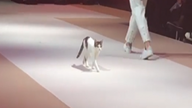 Cat Steals The Show as it Graces the Ramp With Its 'Catwalk' at Fashion Show in Turkey; Watch Video