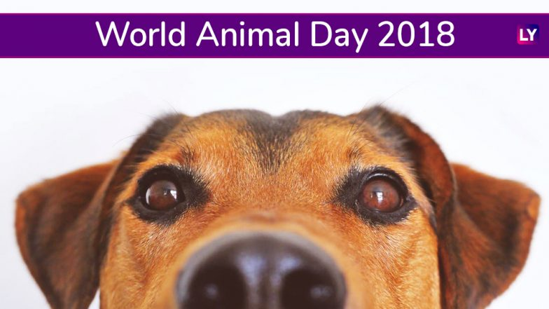 World Animal Day 2018: Know About the Day Campaigning For Animal Rights and Welfare