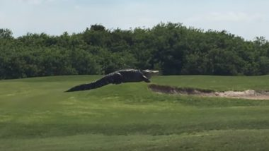 Huge Alligator  on a  Florida Golf Course Freaks Everyone Out