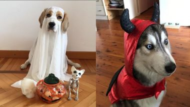 Dog Halloween Costume Ideas 2018: Easy an Quick Costume Inspiration for Your Furry Good Boy!